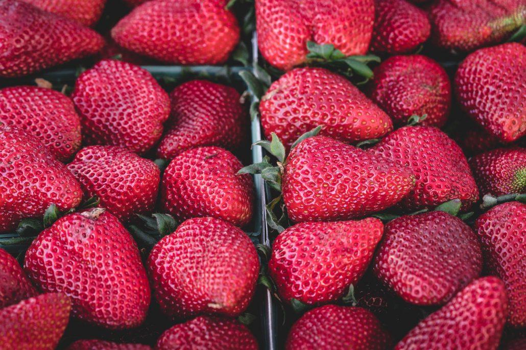 Sistema sustentable para el cultivo de la fresa