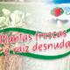 Plantas frescas de fresa a raíz desnuda