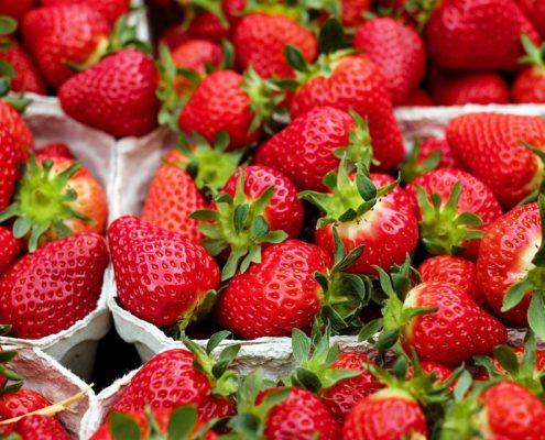 compra de plantas de fresa